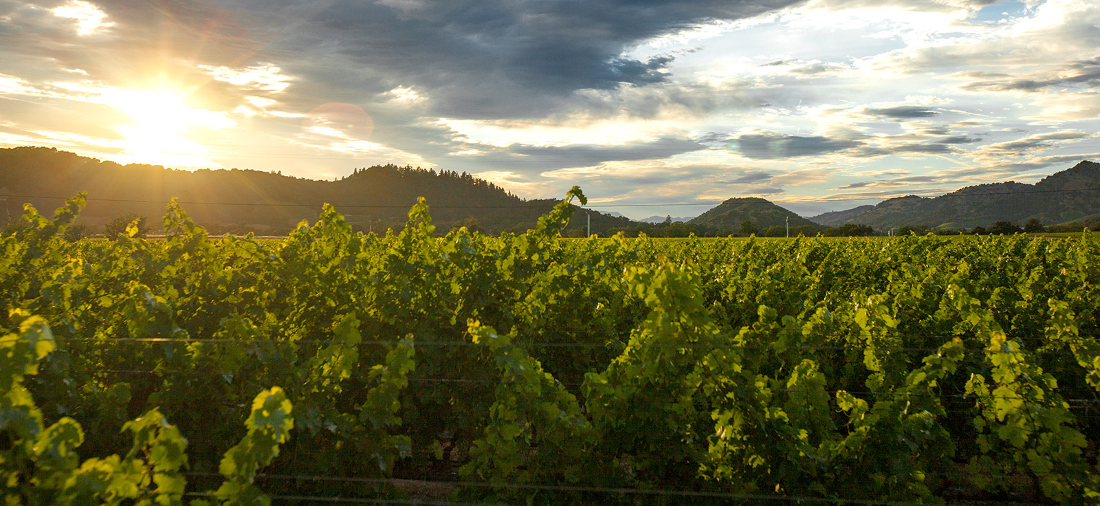 Visiting Napa Valley?